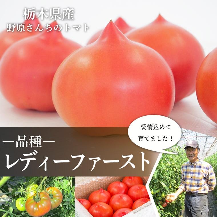 栃木県産野原さんちのトマトレディーファースト