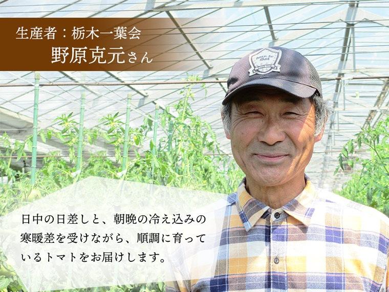 野原さんちのトマト