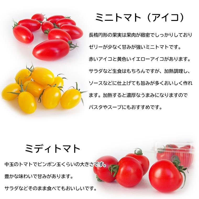 トマトの特徴