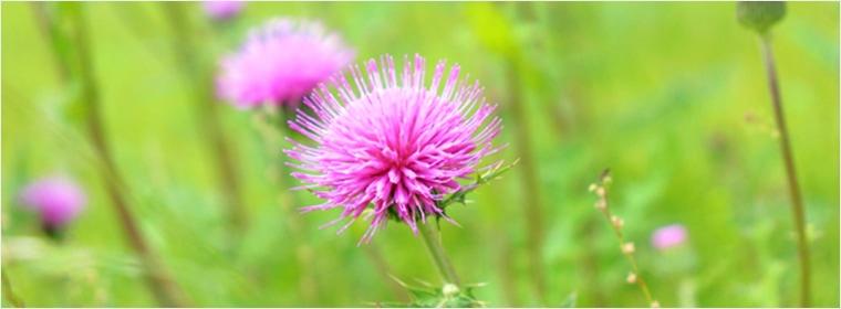 あざみの花のはちみつ