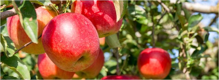 りんごの花のはちみつ
