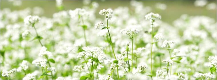 そばの花のはちみつ