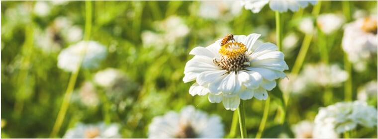国産野草のはちみつ(百花蜜)