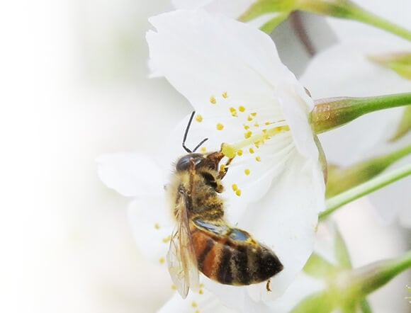 花粉をあえて残す独自の「ろ過器」