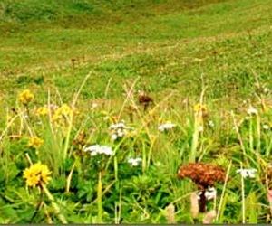 北海道産・青森産 野草の花のはちみつ