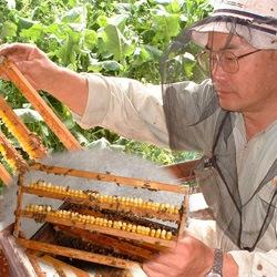 ローヤルゼリーの源 天然花粉