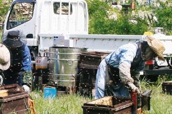 養蜂の様子3