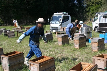養蜂の様子1