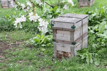 養蜂の様子2