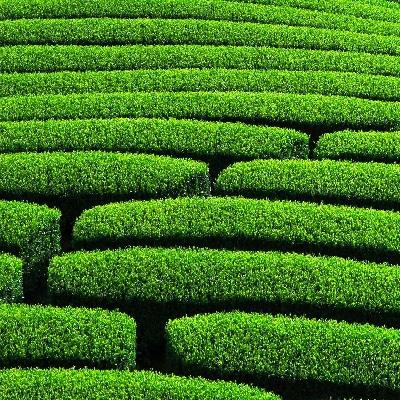 主な日本茶の栄養成分