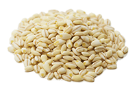 国産もち麦粒