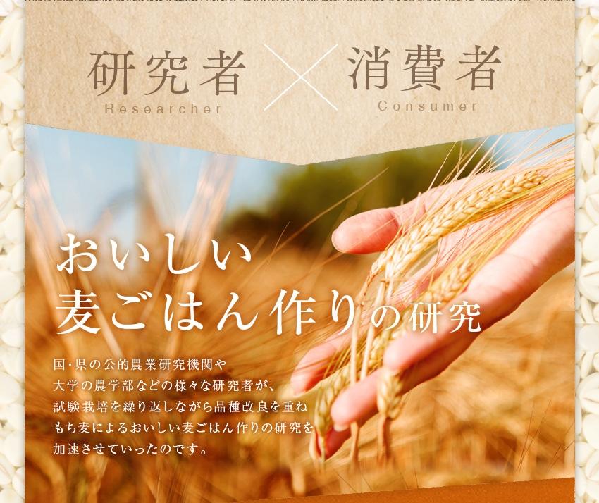 研究者×消費者 おいしい麦ごはん作りの研究 国・県の公的農業研究機関や大学の農学部などの様々な研究者が、試験栽培を繰り返しながら品種改良を重ねもち麦によるおいしい麦ごはん作りの研究を加速させていったのです。