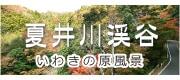 夏井川渓谷アカヤシオサロン
