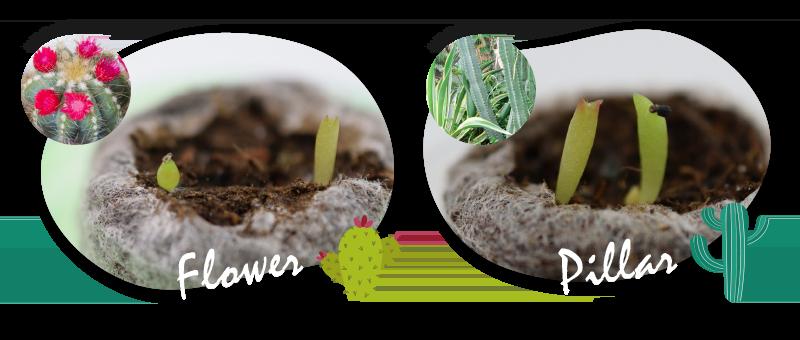 Flower_Pillar