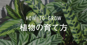 How to 植物の管理方法