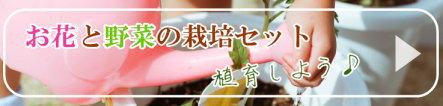花と野菜の栽培セット