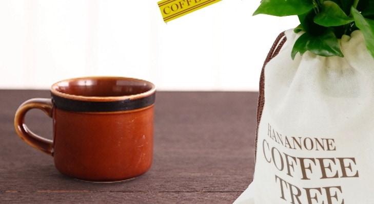 コーヒーの木を育てよう