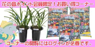 赤塚植物園オンライン花の音 会員限定商品ページ