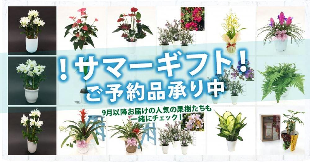 赤塚植物園オンライン花の音 2021年サマーギフト