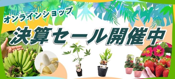 赤塚植物園オンライン花の音 決算セール