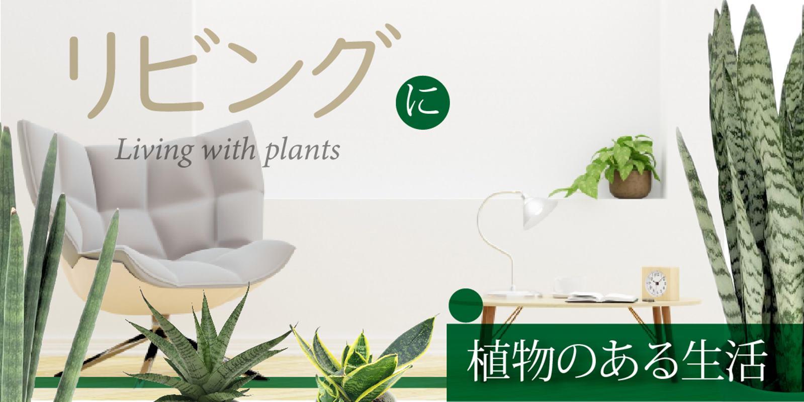 リビングで楽しむ植物