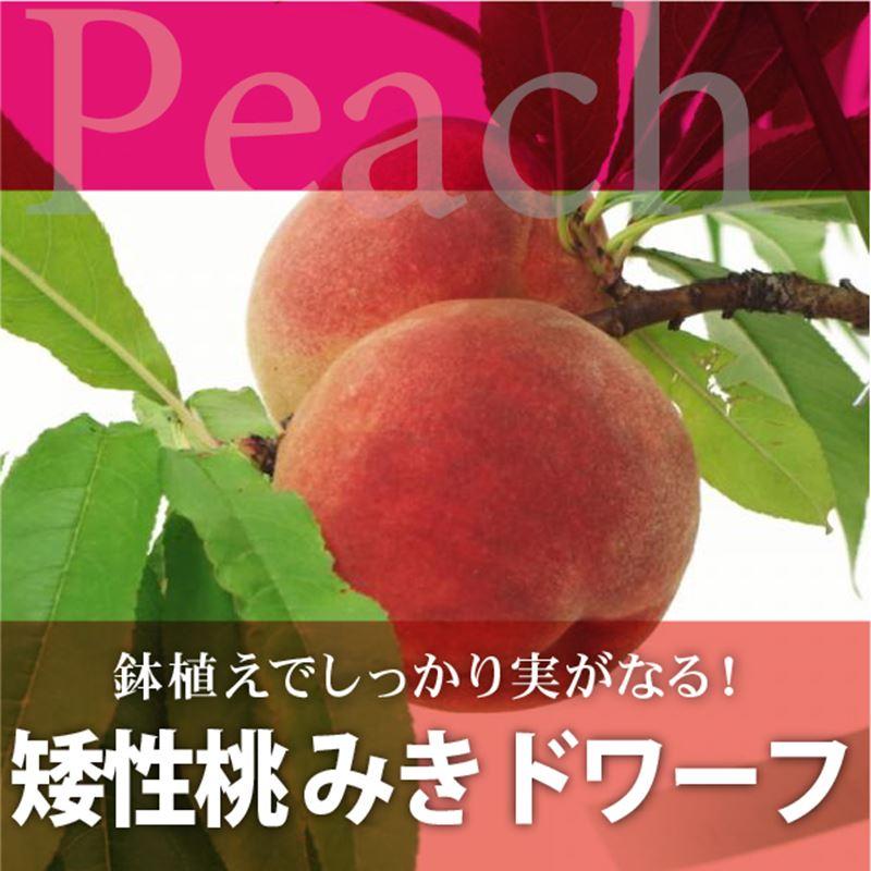 矮性桃 みきドワーフ
