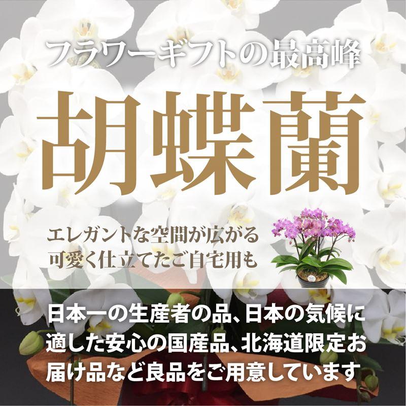 赤塚植物園オンライン 胡蝶蘭
