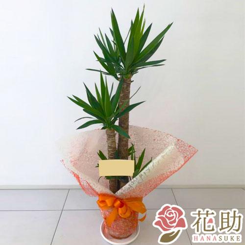 観葉植物 10000円
