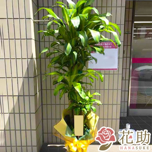 観葉植物 15000円