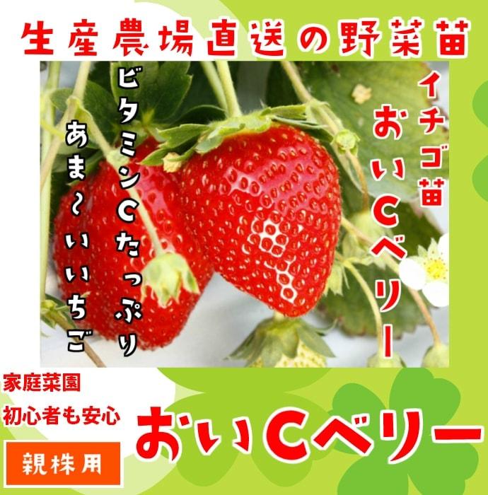 苗 イチゴ の