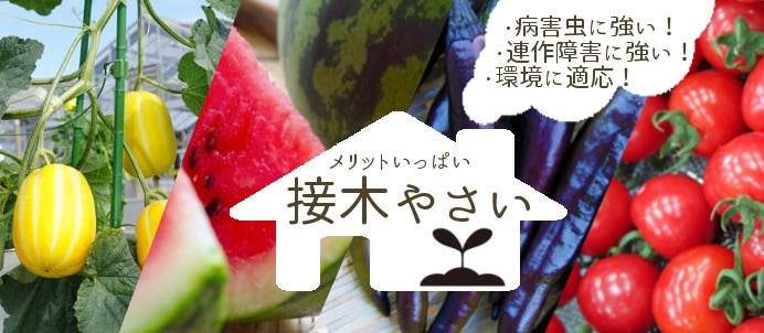 春に植える野菜の苗