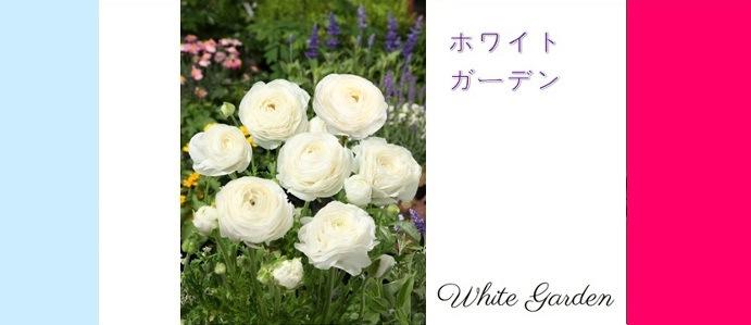 ホワイトガーデン