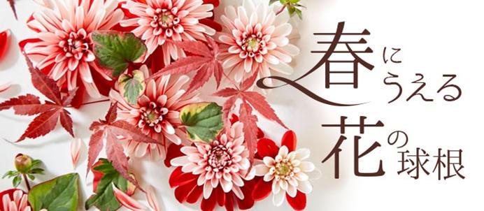 春にうえる花の球根