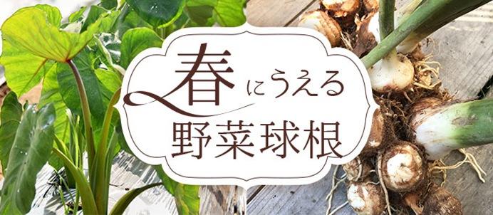 春にうえる野菜球根