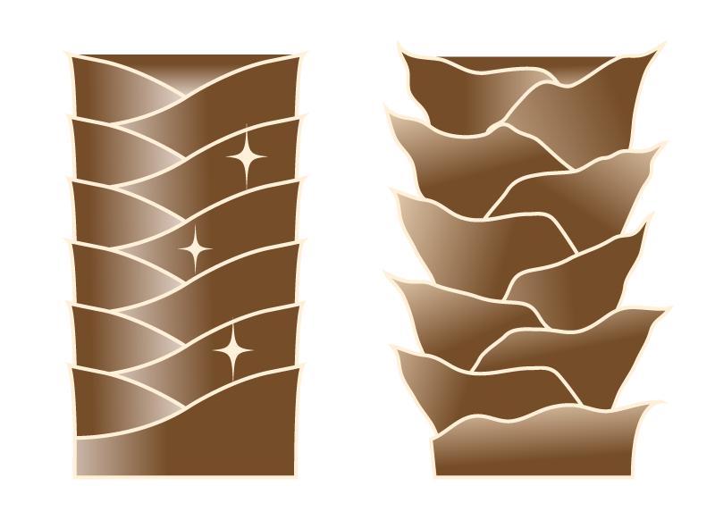 キューティクル図