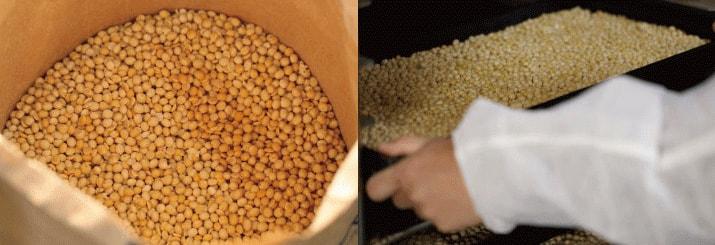 工場で大豆を加工している姿