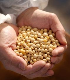 たくさんの大豆を手に持っている
