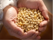 大豆の産地