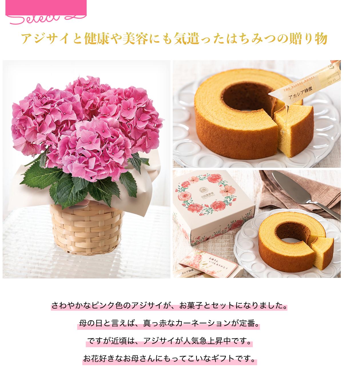 アジサイ・山田養蜂場「バームクーヘン蜂蜜付き」セット