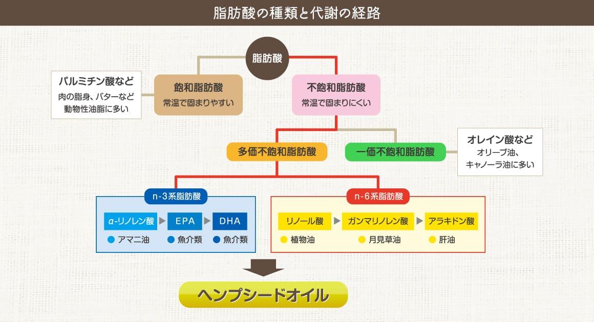 脂肪酸の種類と代謝の経路