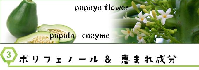 papain_enzyme、 papaiya_flower