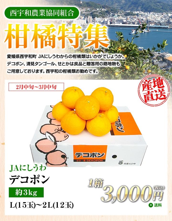 【JAにしうわ:柑橘特集】デコポン約3kg L(15玉)〜2L(12玉)