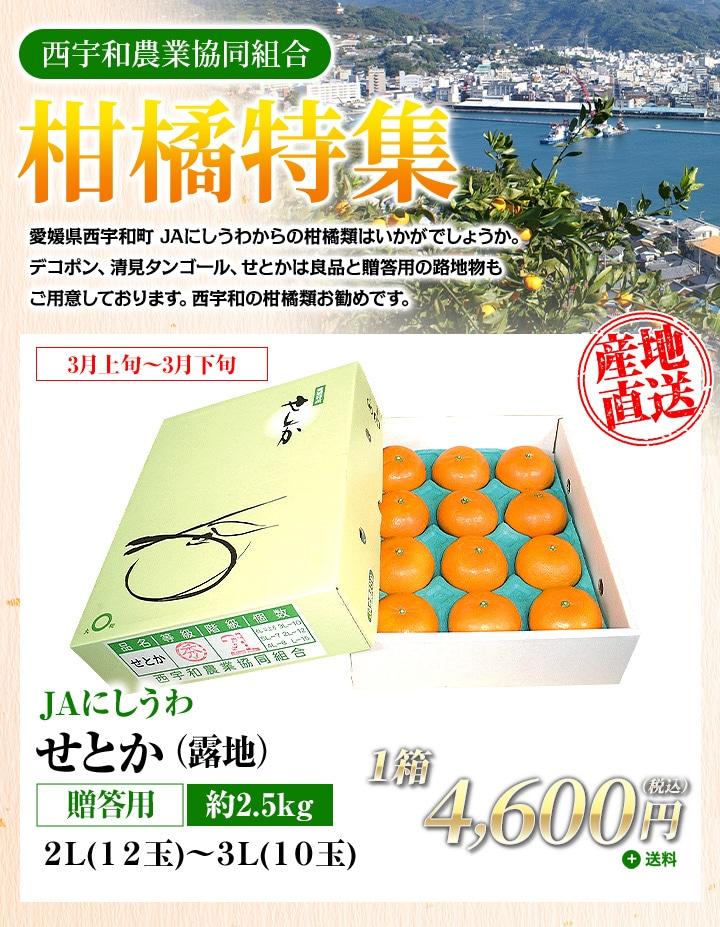 【JAにしうわ:柑橘特集】せとか(露地)約2.5kg 贈答用2L(12玉)〜3L(10玉)