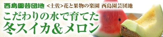 【土佐】花と果物の楽園 西島園芸団地・こだわりの水で育てた冬スイカ&メロン ★送料込★