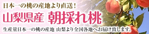 """""""【日本一の桃の産地より直送!】特選もも"""