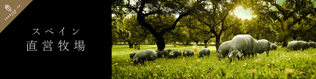 スペイン直営牧場