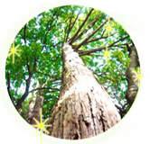 天然檜で森林浴