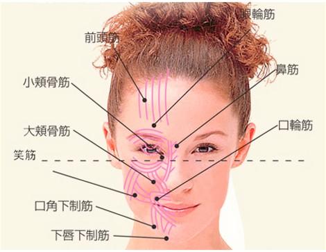 顔の下部に筋肉が集中