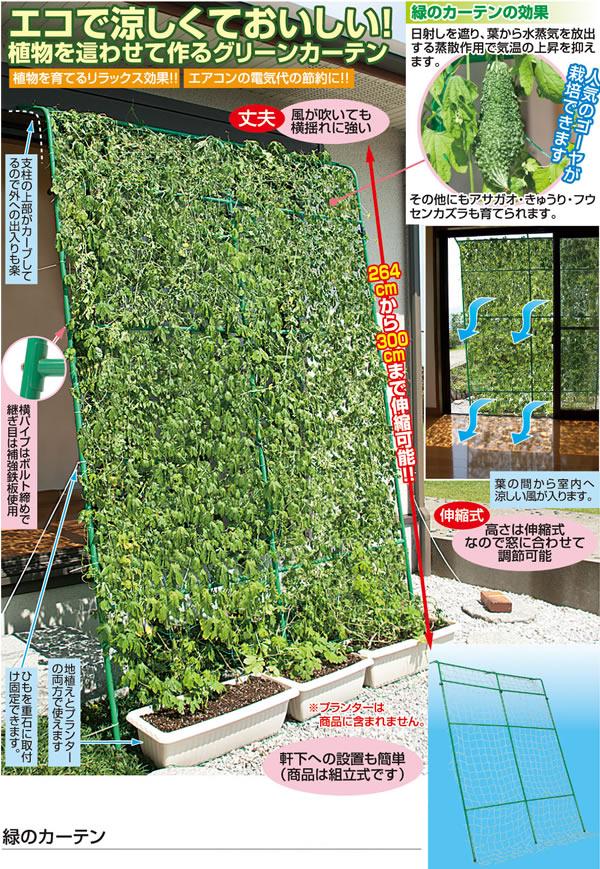 エコで涼しくておいしい。緑のカーテン