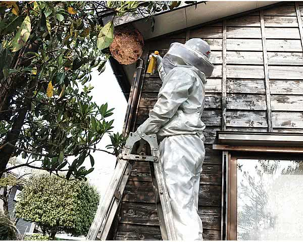 ラプターで蜂の巣駆除